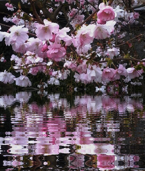 Spring reflections...animated by ansdesign