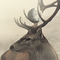 Mystic Stag by centric-prometheus