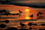 sunrise over the beach by TlCphotography730