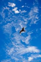 The Sky is the Limit by Shroker