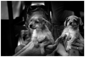 sheinkin puppies. by ohshrubbery