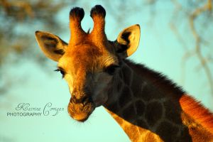 Giant giraffe by KatrinaCorrigan