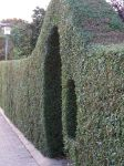 High hedge by Lustanjo-Stock