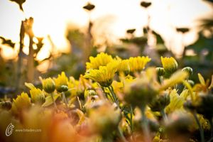 Yellow Hope by fahadee