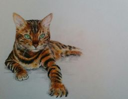 Bengal cat by Vanimelda4