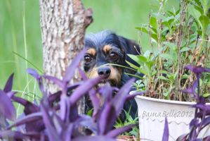 Peek A Boo I See You Mama by BamaBelle2012