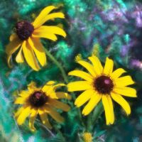 Black-Eyed Susan Abstract by MuseSusan