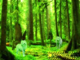 Wolfs in the forest by pascoadavis