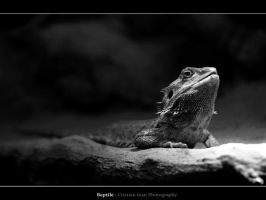 Reptile by joanchris