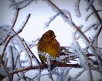 Resting in the cold winter by ANorthernStar