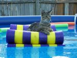 Pool Cat by DragonflyHeart