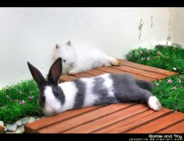 2 Bunnies  Barbie-Tiny ??? by Janjanita