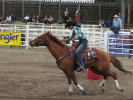 Rodeo Horse Stock 14 by horsecrazycool