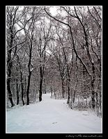Winter forest by victory-a13
