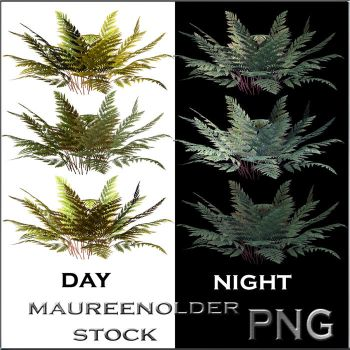 STOCK PNG ferns night and day by MaureenOlder