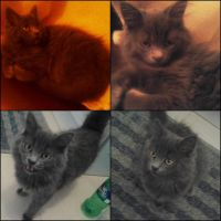 This is my new cat :3 by deathnote290595