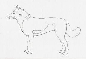 Canine Lineart by Nuuuk