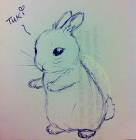 random rabbit =:B by TixieLix