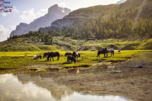 Horses at the Fanes alp by lailalta