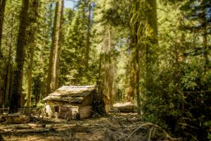 Sequoia cabin by parkourprodigy