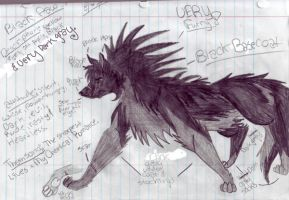 black paw ref. sheet by BiTTENwolf