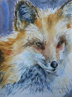 Fox by danuta50