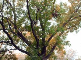 Majestic Pecan Tree by Gothic-Rebel