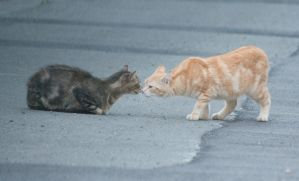 stray cats 2 by Jules171