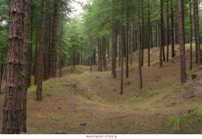 Forest 71 by AnitaJoy-Stock