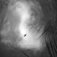 If I Were a Swallow by Markus43