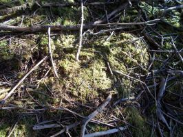 Moss and Sticks. by ohallford