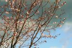 Blossoms - 7879 by Snuley