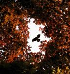 The Month of May by SteamHarden