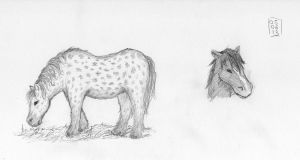 Sketch-a-Day 05-06-13: Nordic Horse by ThroughMyThoughts