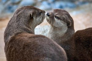 Otter love... by Seb-Photos