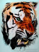 Tiger (Color pencil Drawing) by Ankredible