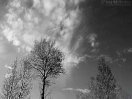 The Tree on the Hill II - bw by wroth