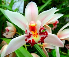 The incredible flower (cymbidium orchid) by Cloudwhisperer67