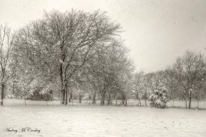 Snow by audness