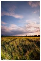 The Cornfield by matze-end