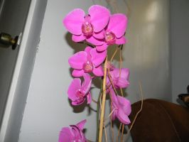 Orchids by Writer4Him