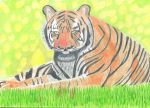 Tiger by ArtfullyArty