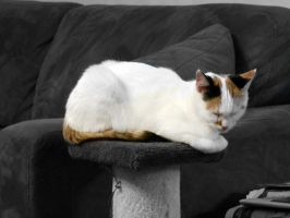 Kitty sleeping on scratch post by Mutilator-Of-Cookies