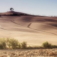 sole di toscana 2851 by bagnino