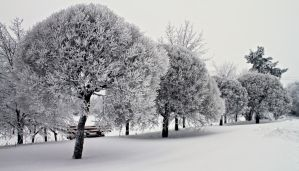 White trees by werneri