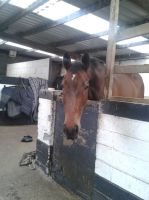 Horse Stock- Treats? For me!? by emmys-stock