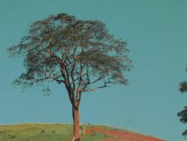 The lonely tree by rabi-ban