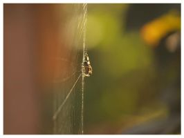 A spider's world I by Ikabe