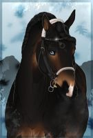 .:   New bridle :. by BRls-love-is-MY-Live