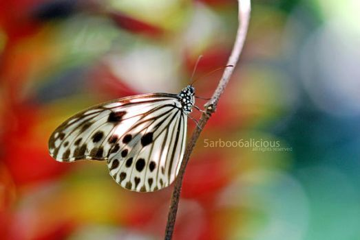 Butterfly by 5arboo6a